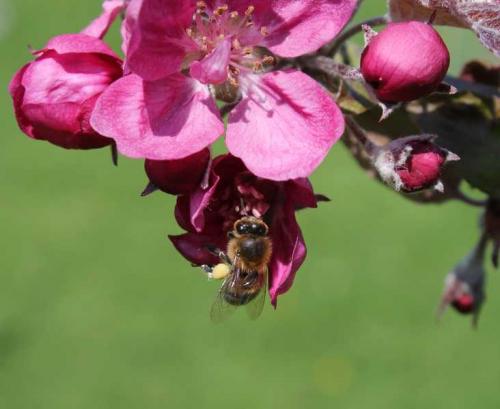 Honey on Sops in Wine Blossom